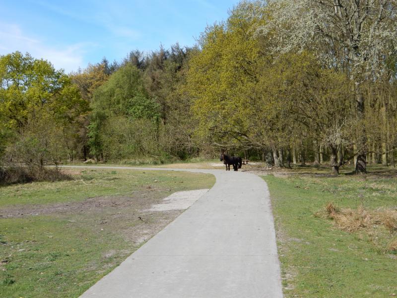 Fietsroute Renesse en omgeving
