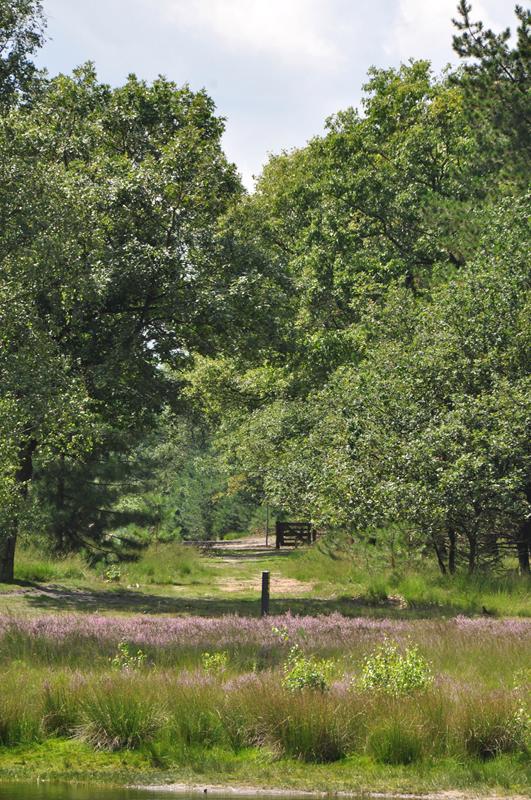 Heide bij het Keelven