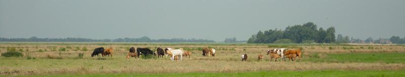 Oud hollandse teferelen in Waterland