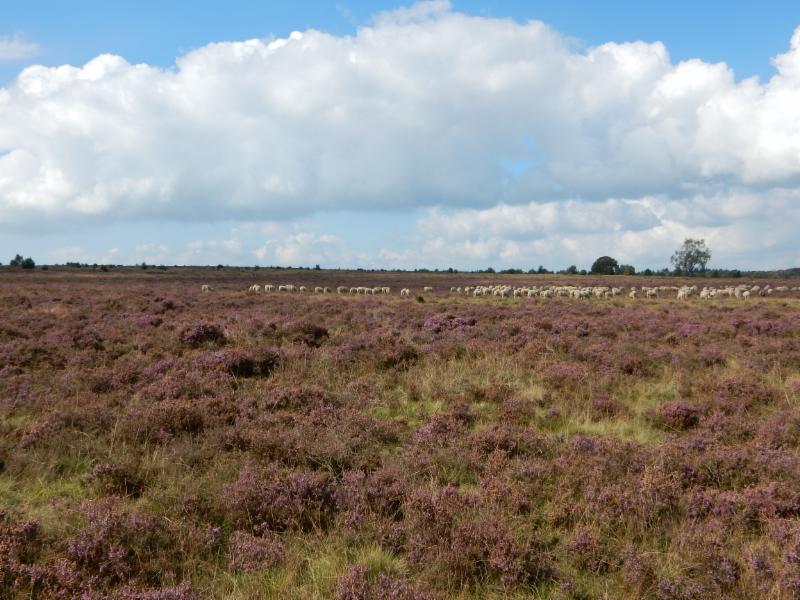Fietsroute Doorwerth en omgeving