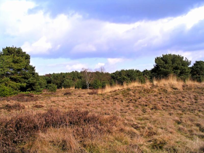 Boshoverheide-Prehistorische urnenvelden