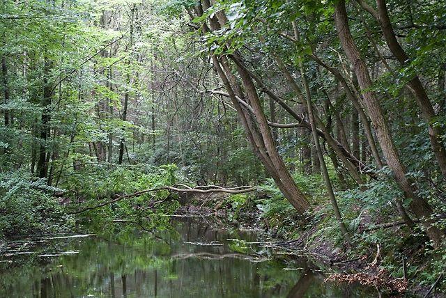 Voorsterbos