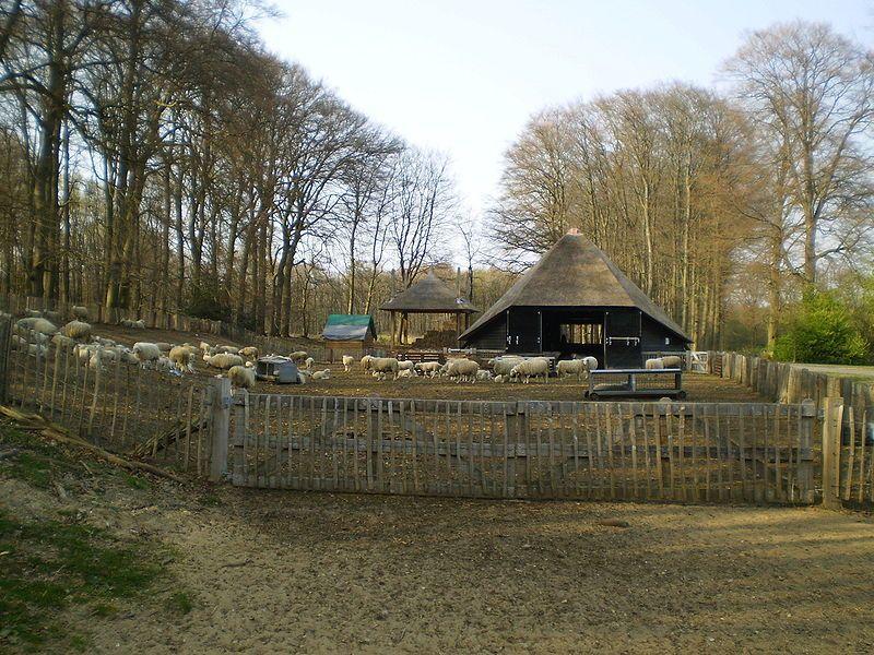 Schaapskooi in Hoog-Buurlo