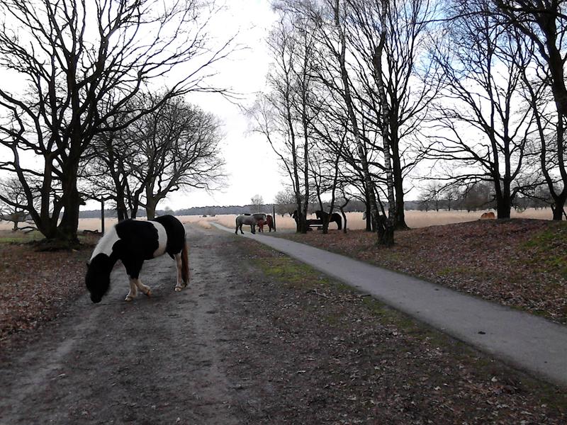 paarden op de Kampina