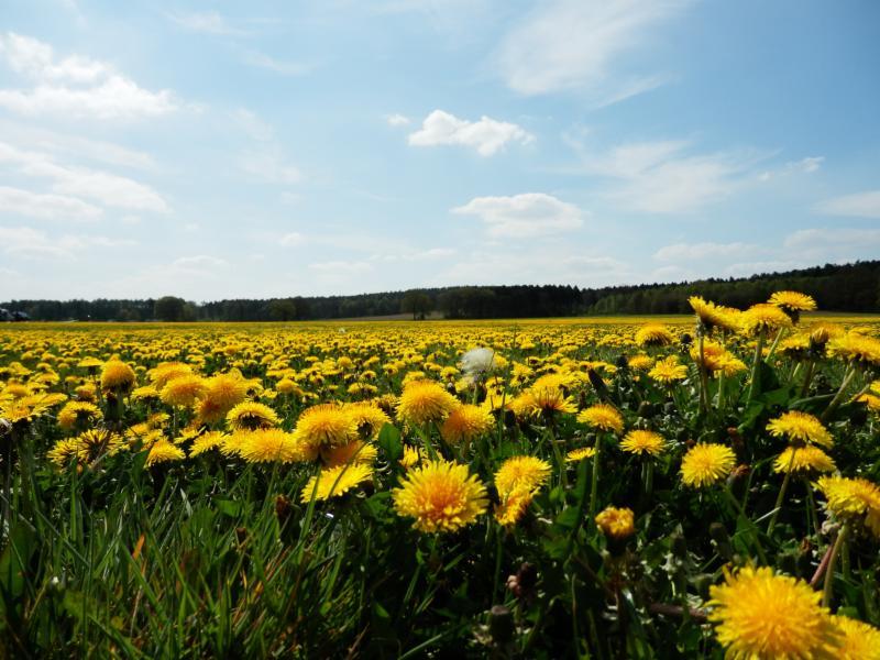 Bloemenvelden vergezichten