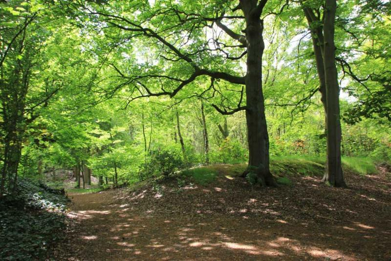 Nieuw Leeuwenhorst Bos
