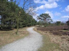 Hooge Heide