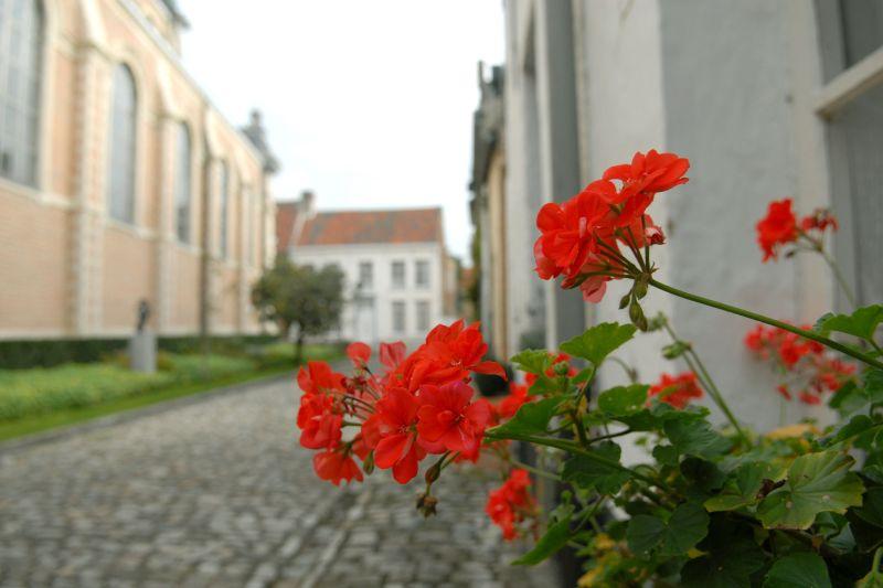 foto_lier_3_(c)miedebacker