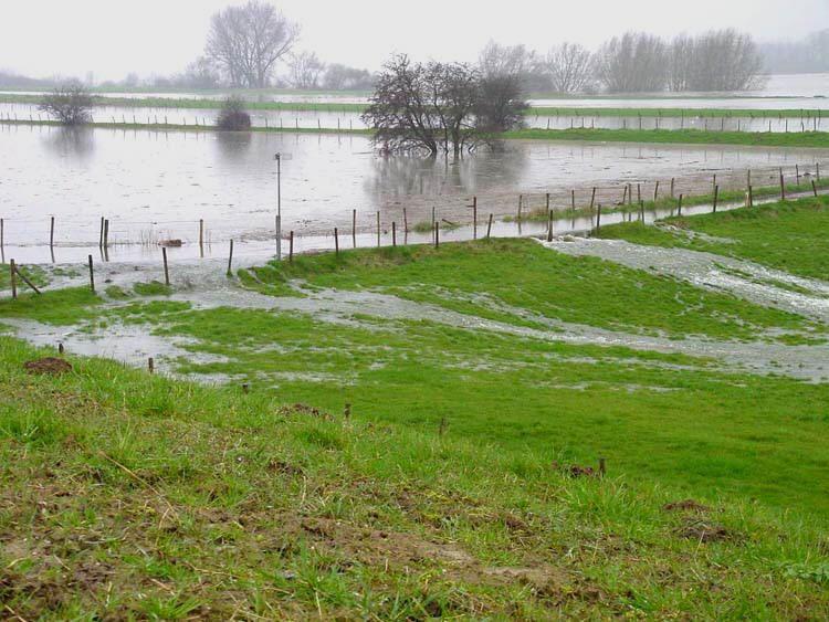 Overstromende uiterwaarden bij de Maas