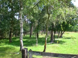 Keizersweg Wezepse Heide