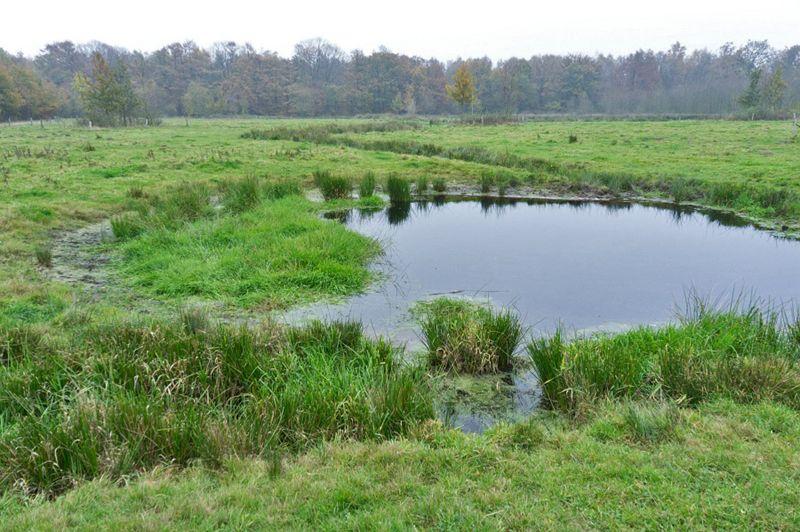 Landgoed Hengforden