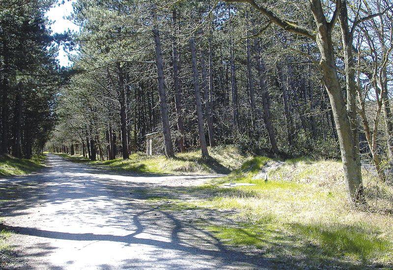 Foto 2: Fietstocht langs wad, polder, duin en bos