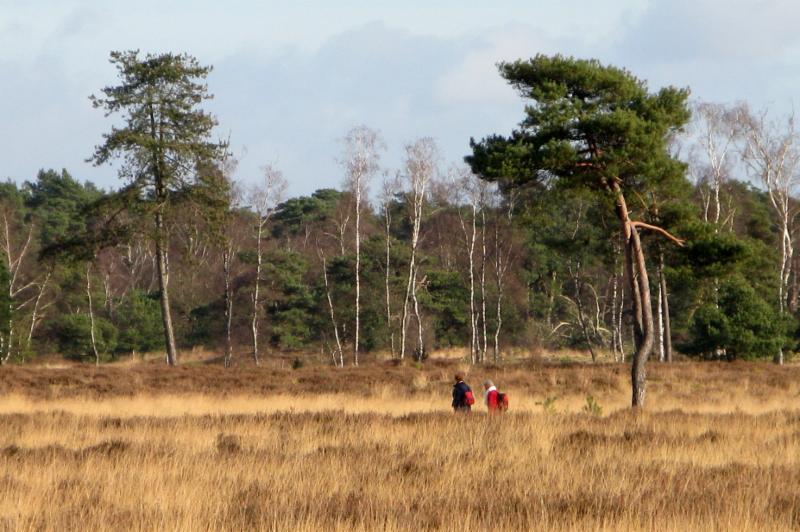 Leersumse veld