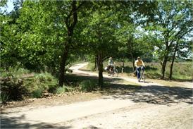VVV Eersel fietsen in de bossen