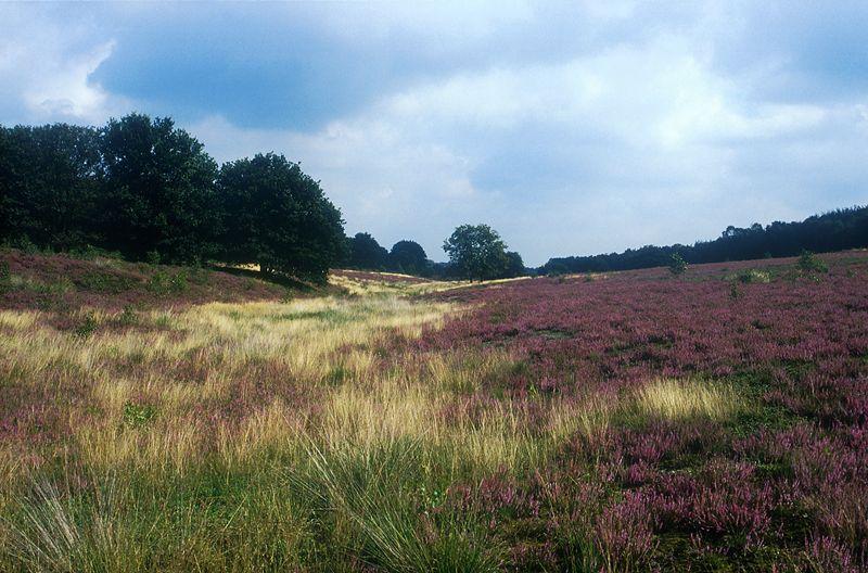 Heidevelden van de Sallandse Heuvelrug