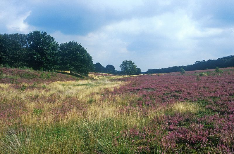 Heide Sallandse Heuvelrug
