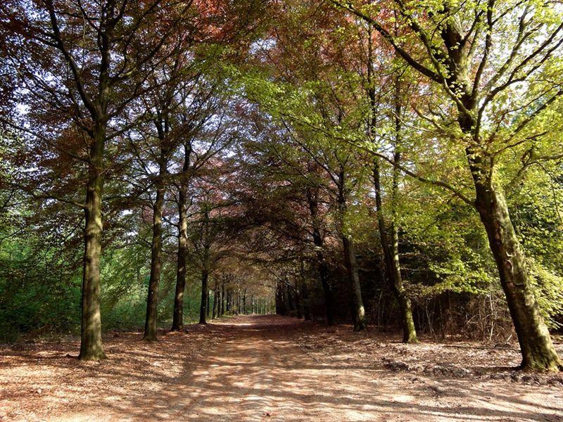 Prattenburgse bosch
