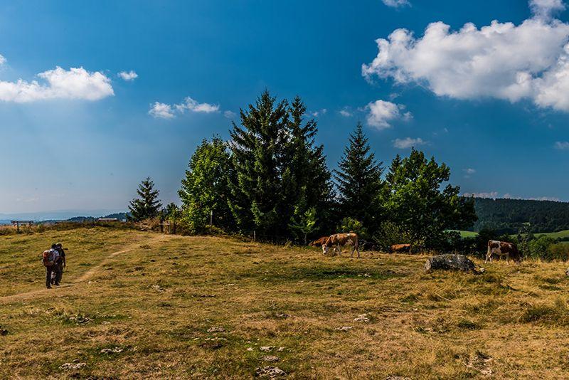 Hooggelegen weide bij Dachsberg