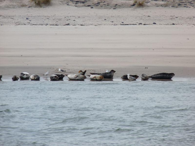 zeehonden in de haven