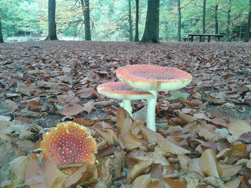 Foto 1: Op de fiets door het Brabantse Land