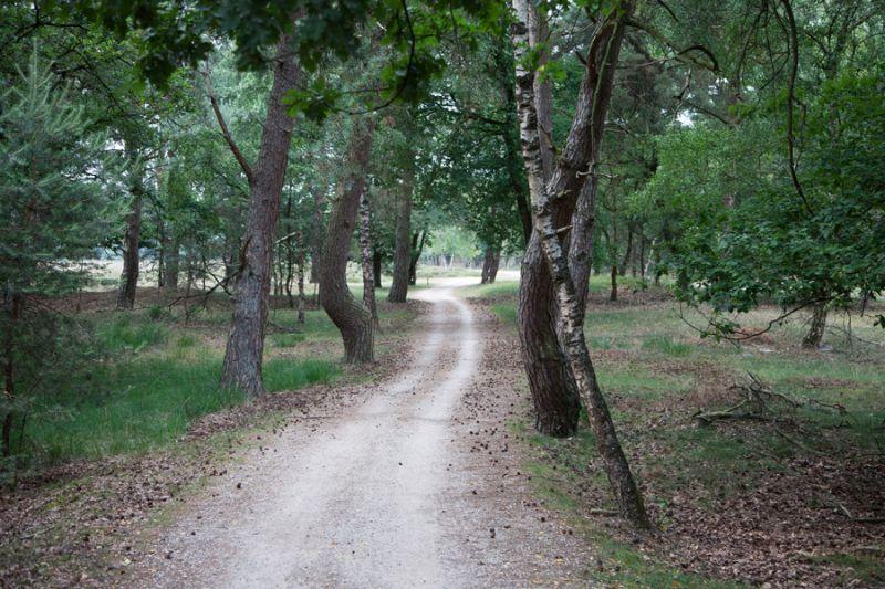 boswachterij-sint-anthonis-bospad