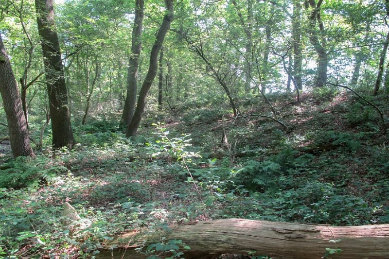 boswachterspad-westerwolde-ter-apelerbossen-leidijk