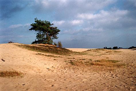 Kootwijkerzand