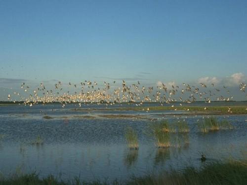 Lauwersmeer, een waar vogelsparadijs