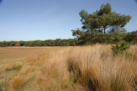 Kuikseindse Heide