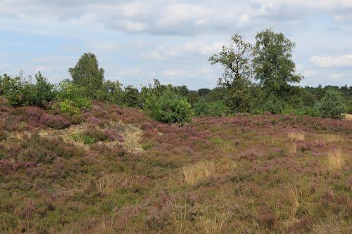 Oostelbeerse Heide