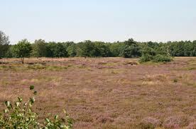 Heide, Westerbork