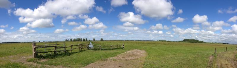 Weiland in Lauwersmeer gebied