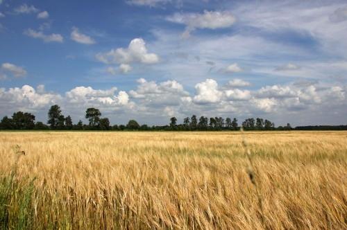 Weenderveld