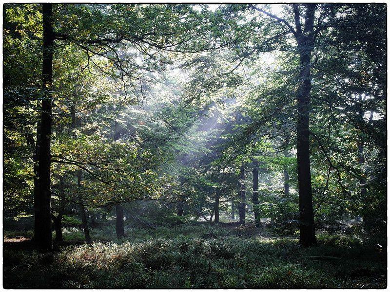 damp woods