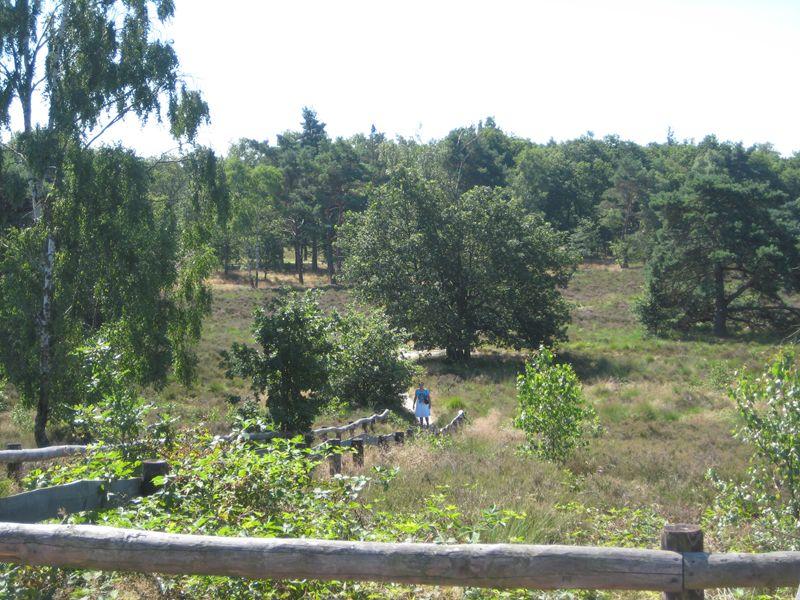 Bossen tussen Soest en Leusden