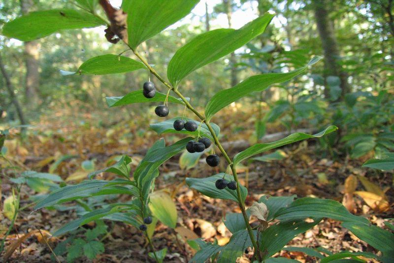 boswachterspad-westerwolde-ter-apelerbossen-salomonszegel