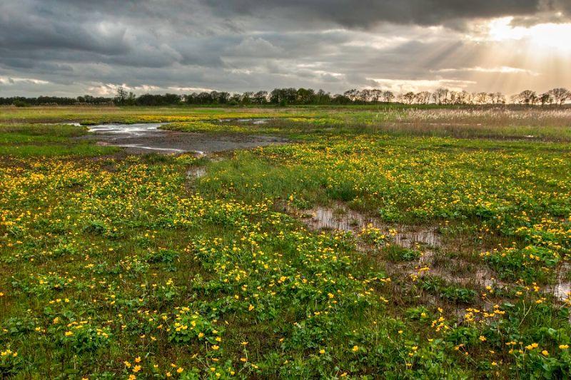 boswachterspad-drentsche-aa-oudemolensediep-hooiland-dottervelden