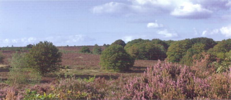 Heidevelden op de Haarlerberg