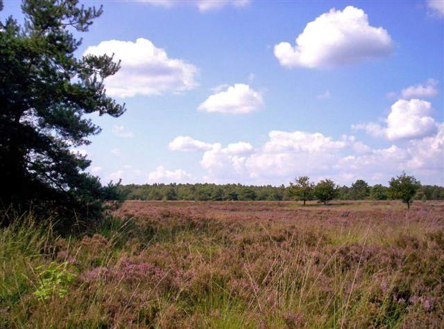 Oud Buisse Heidevlakte