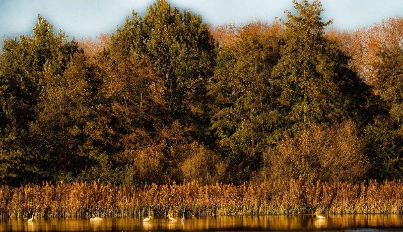 Vogelkijkhut Het Goor