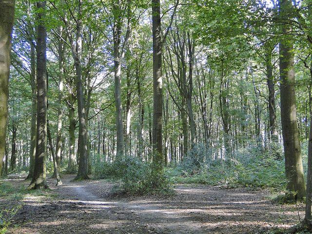 Onderste bosch