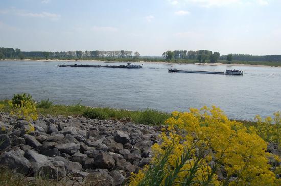 De Rijn. bij Tolkamer