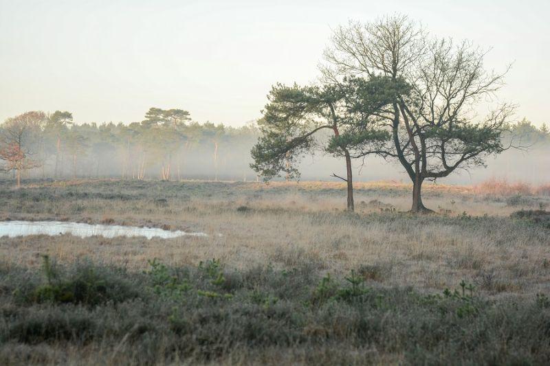 boswachterspad-baronie-van-breda-strijbeekse-hei