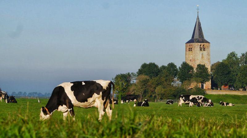 Foto 0: Door de polders rond Oudebildtzijl