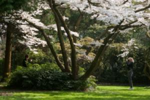 Foto_arboretum_