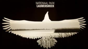 Landmark Zeearend Lauwersmeer