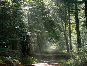 Afbeeldingsresultaat voor ommen boswachterij
