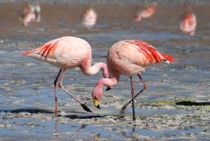 9.Zwillbrockervenn met flamingoâ??s