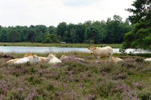 Strijbeekse Heide