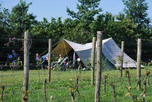 Kamperen tussen de wijngaard bij Erve-Wisselink